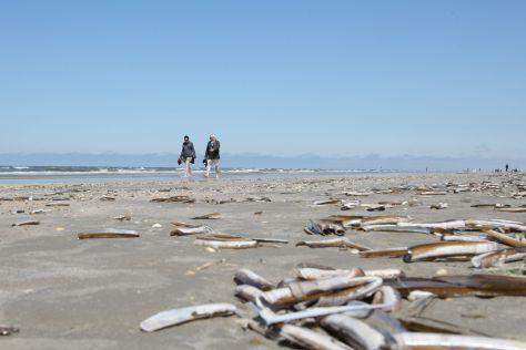 Schwertmuscheln liegen am Strand der daeischen Insel Roemoe
