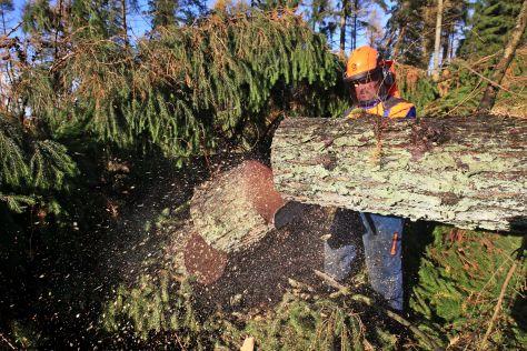 """Sturmtief """"Christian"""" hinterlässt schwere Schäden in den Forsten"""